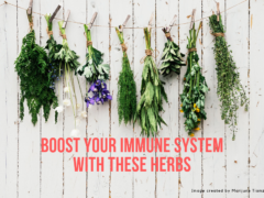 Boost Your Immune System with These Herbs