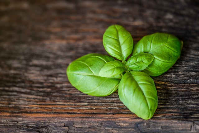 basil boost your immune sytem with these herbs